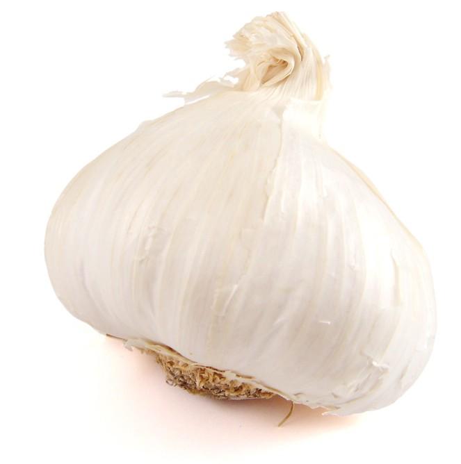 garlic-01